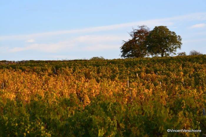 Balade au vignoble deVerzé