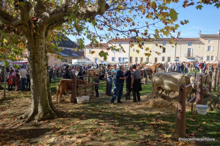 Fête de la St Martin à Cluny: foire aux chevauxlourds
