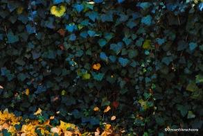 Mur végétal ombragé